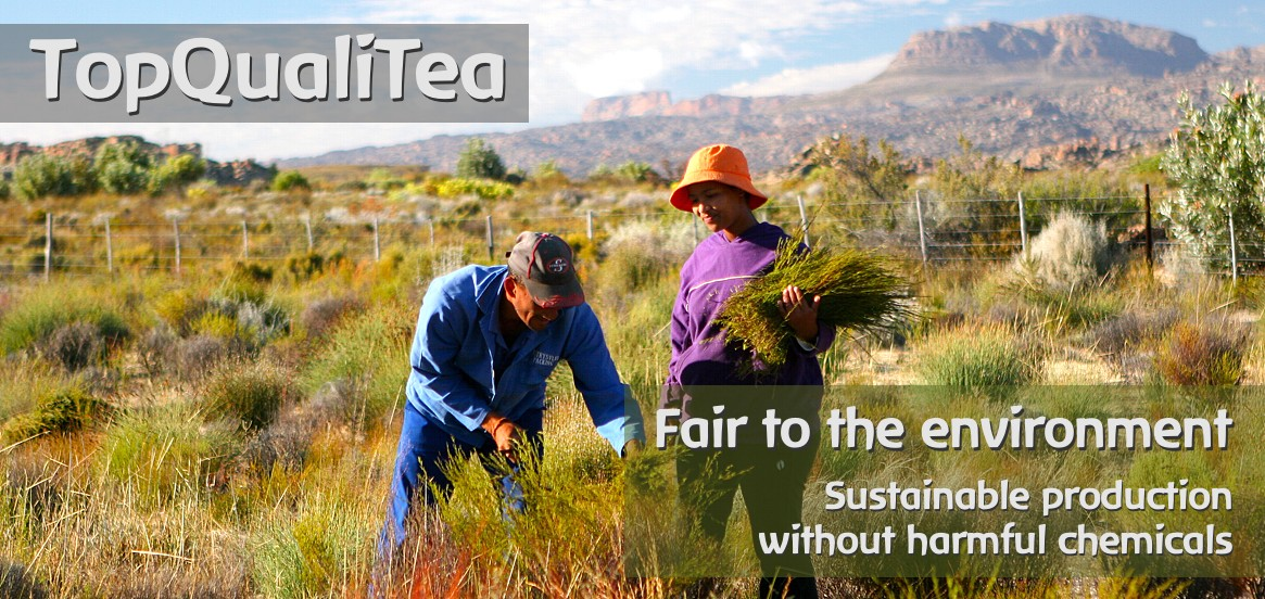 TopQualiTea - making the difference in organic and fairtrade certified Rooibos, Honeybush and Olive Leaf Teas from South Africa.